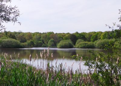 Epsom Common pond, at one of many local open spaces